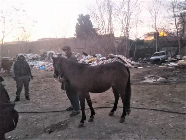 2021/01/1611409414_konak_zabitasi_atlari_kurtardi_(1).jpg