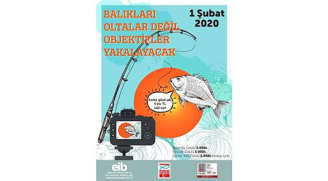 Balıklar, bu yarışma ile meşhur olacak!