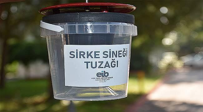 Sirke sineğine tuzaklı önlem