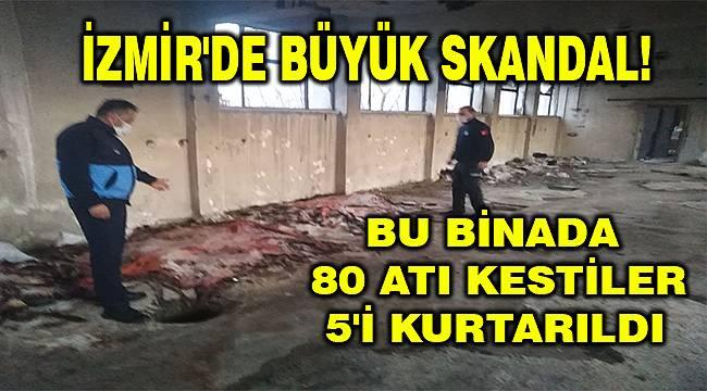 İzmir'de et operasyonu: Atları kesmişler!