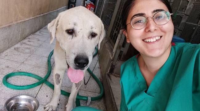 Yaşamından umut kesilen köpeği Büyükşehir veterinerleri hayata döndürdü