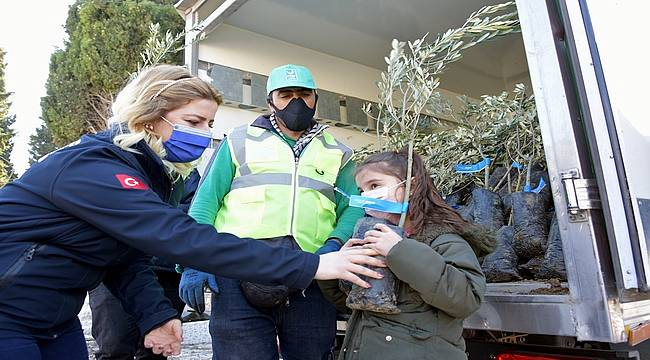 Aliağa Belediyesi'nin Zeytin Fidanı Dağıtımları Sürüyor