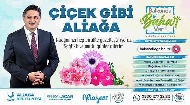 Aliağa Belediyesinden Her Balkona Çiçek